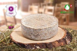 formaggio-Il-Cardo-1